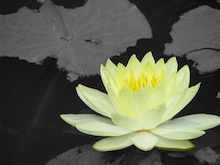 Story of the Lotus Blossom&#8230;